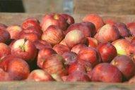 https://www.etsy.com/ca/listing/179041821/fall-bounty-of-red-apples-art?