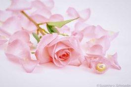 https://www.etsy.com/ca/listing/121331000/pink-rose-flower-photography-rose-petals?