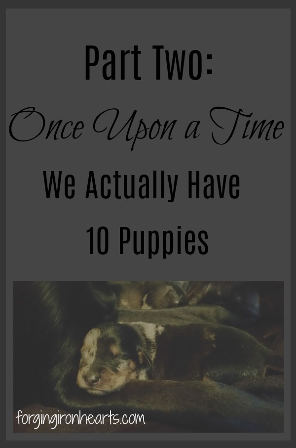 Part Two: Once Upon a Time… We Actually Have 10 Puppies