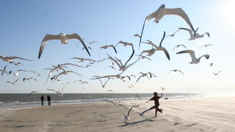 Children running through a flock of seagulls