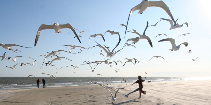 Children running through a flock of seagulls