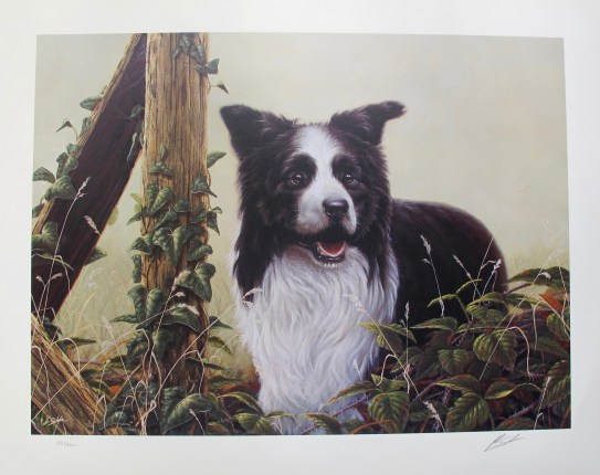 JOHN SILVER BORDER COLLIE DOG Hand Signed Ltd Editon Art Lithograph RARING TO GO