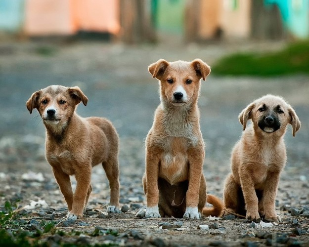 dogs-984015_1280-625×500