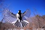 night-bird-1126076_1920-150×100