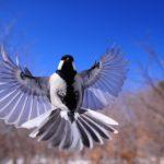 night-bird-1126076_1920-150×150