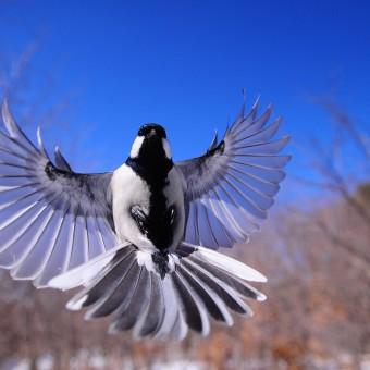 night-bird-1126076_1920-340×340