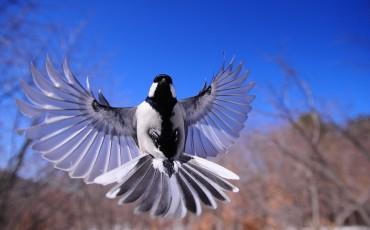 night-bird-1126076_1920-370×230