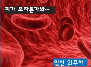 산모의 빈혈과 철분제