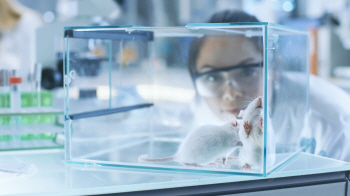 쥐 실험 여자 동물실험