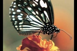 Monarch on a Marigold - Amateur Photographer Cover by D. K. Rathore