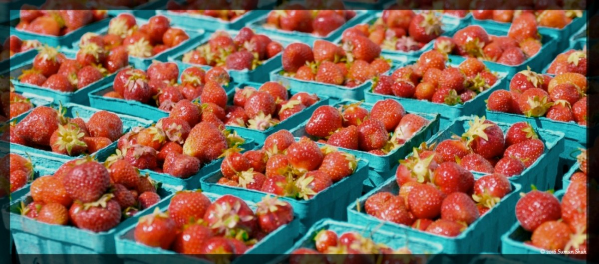 Strawberry Jam - Fresh picking at Marini Farms, Ipswich, MA