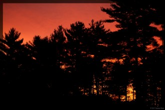 Sunrise behind the pines