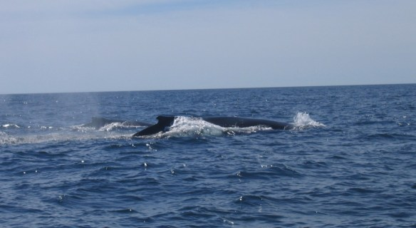 whaless