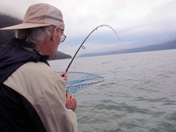 reeling in halibut Gone Fishin' Knight Inlet BC