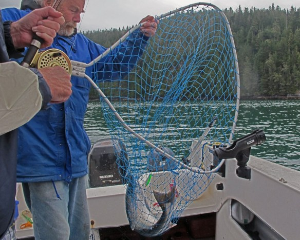 Netting the halibut Gone Fishin' Knight Inlet BC