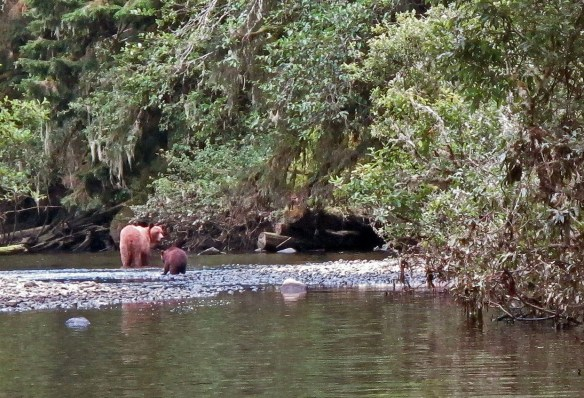 mama grizzly and bahy Gone Fishin' Knight Inlet BC