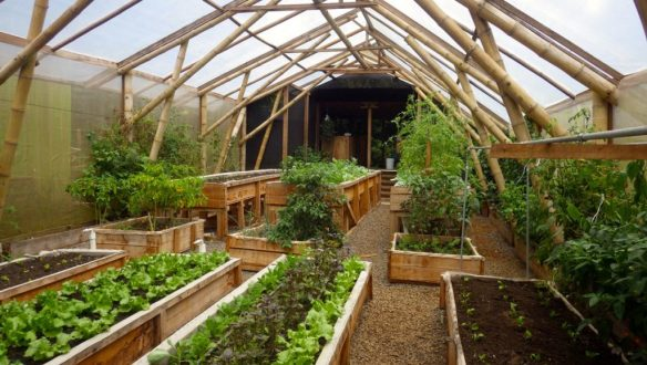 Greenhouse at Macaw Lodge Costa Rica