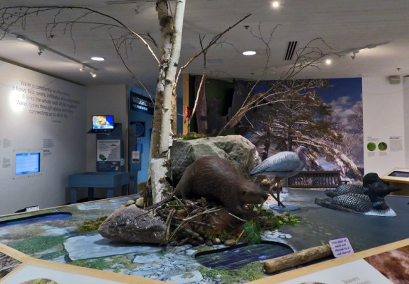 Finding Our Muskoka Soul -display with beaver at Muskoka Discovery Centre