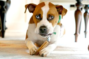 Our Pet Emergency Kit ensures you're prepared for a disaster (pandemic-included) when you have pets.