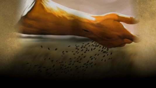 La semilla brota y crece sin que el hombre sepa cómo