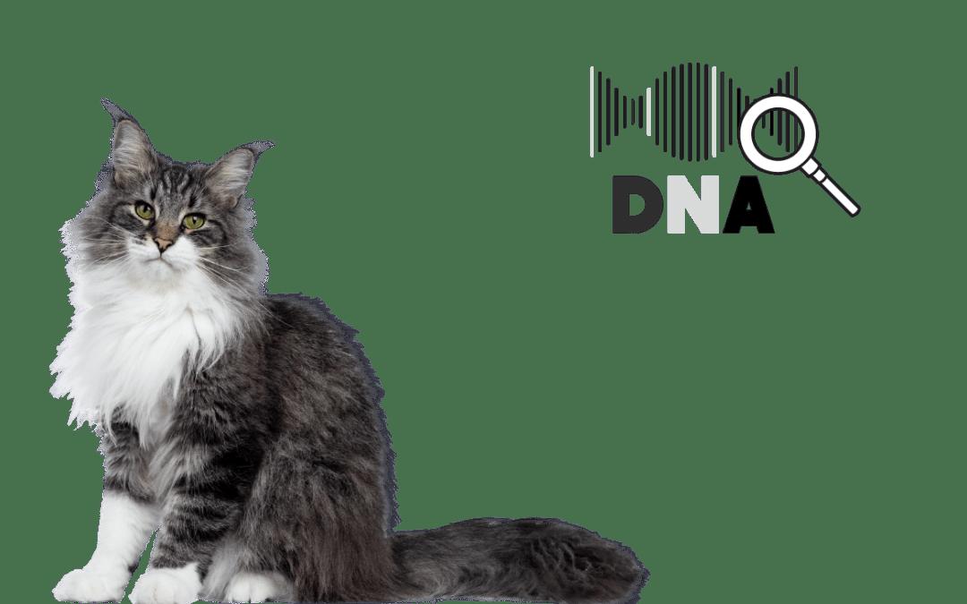 [9] Errores que no deberías cometer nunca con los test de ADN en gatos