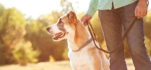 Curso de Adiestramiento Canino Gratis para Enseñar a tu Perro