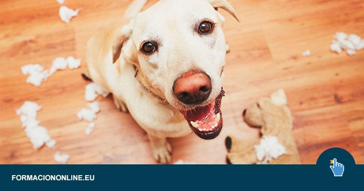 Curso de Psicología Canina Gratis
