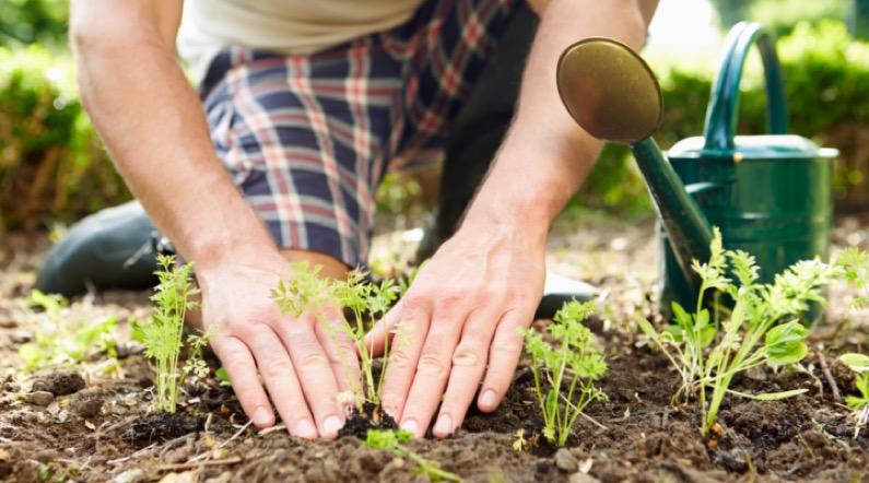 Cursos de jardineria gratuitos