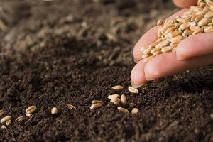 sowing seeds of sel