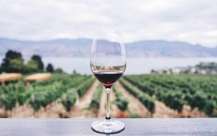 vino viticoltura faenza enologia
