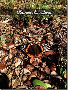 Sorties en forêt observer la nature papillons