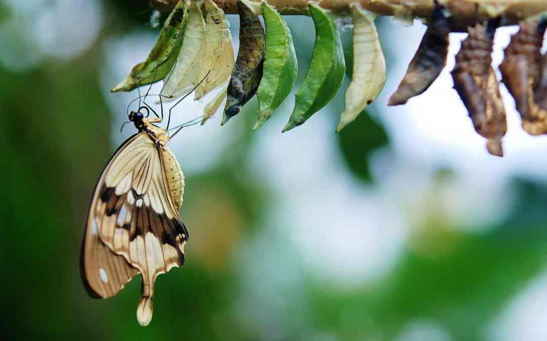 Cocon Sémantique : Pourquoi il peut Booster votre Trafic