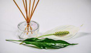White Angelica Essential Oils