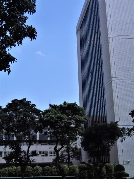 Street trees in Taipei.