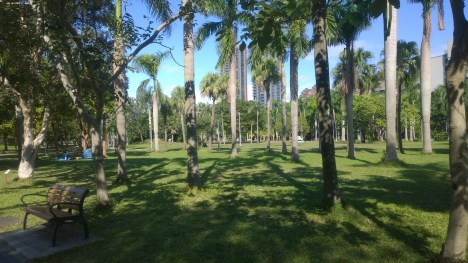 Royal Palms in Da-An Forest Park.