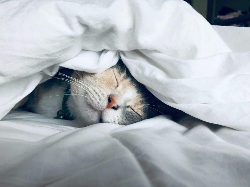 Combien de temps faut-il à un chat pour s'adapter à un nouveau foyer ?