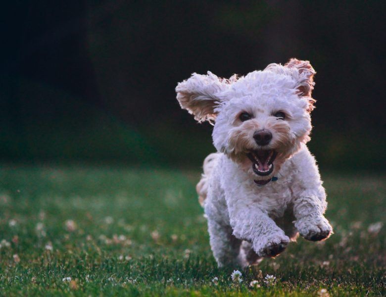 10 raisons d'adopter un chien