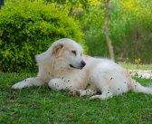 Τα Φιλαράκια. «Ακτινογραφία» στη συμπεριφορά ενός σκύλου