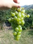 06-grapes