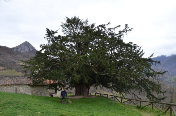 Dave under the yew