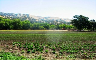 bee-friendly organic agriculture in California's Capay Valley