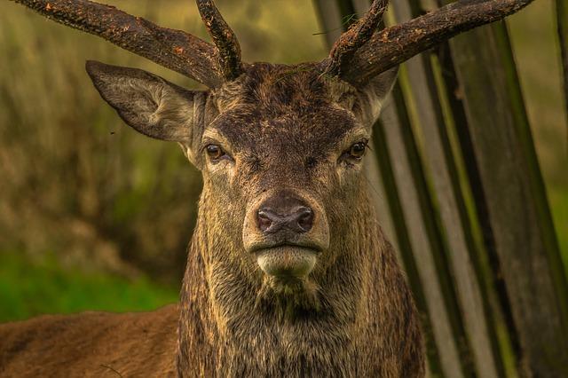 Application Deadline Nears For State Park Deer Management Hunts