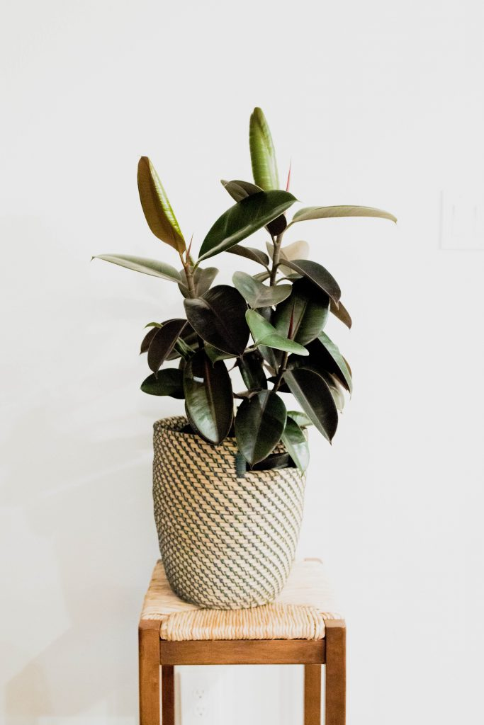 own these houseplants to be more healthy