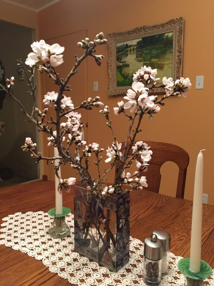 Apricot cutting blossoms