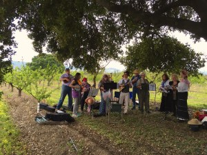 folk band ensemble was playing under a huge oak