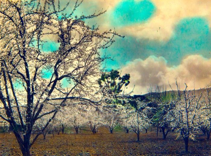 SHM orchard view