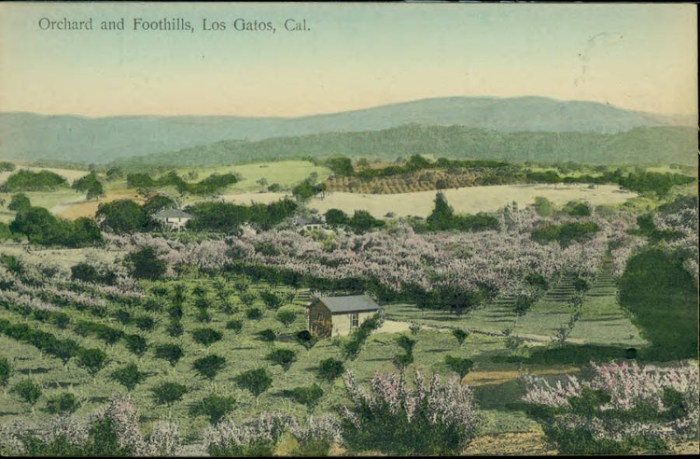 Los Gatos Orchards & Foothills