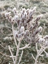 frost-8
