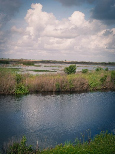 From Crawfish Ponds to Cotton Fields