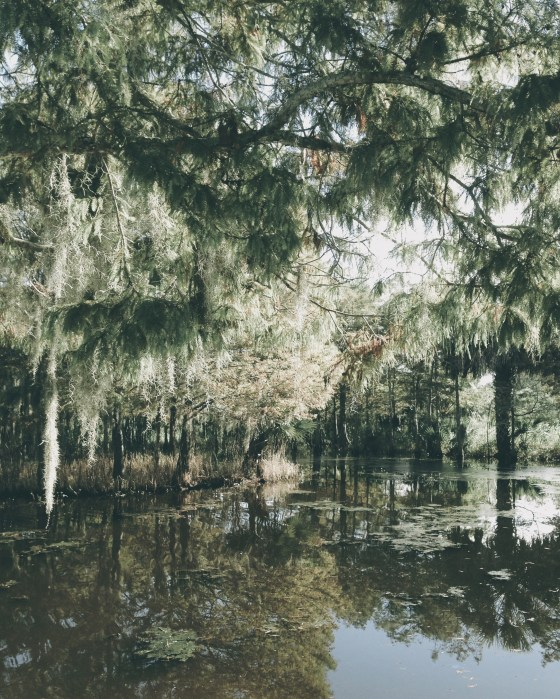 Louisiana Bayou | for the love of the south